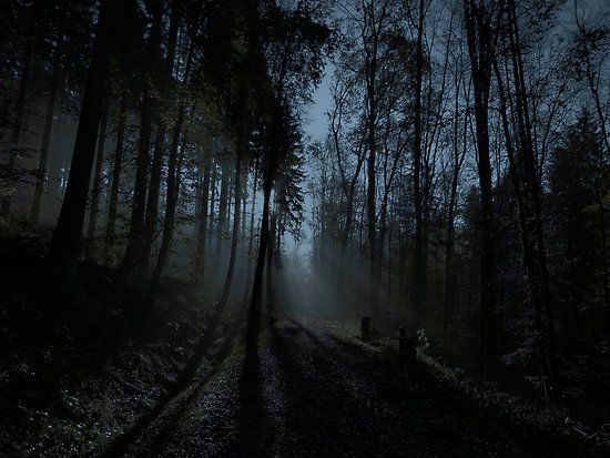 dark and ominous woods