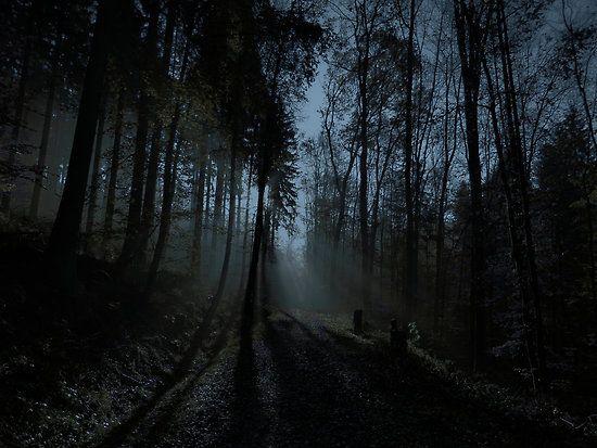 dark and ominous woods